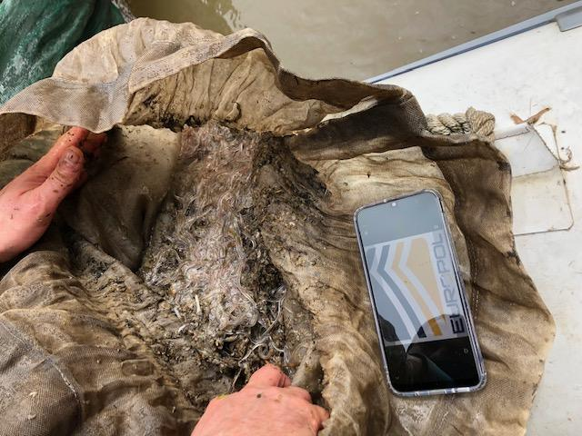 Eels shipped by air found in operation Lake-V